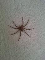 Arachnids of Zimbabwe